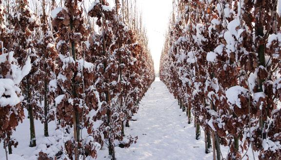 eiken-winter
